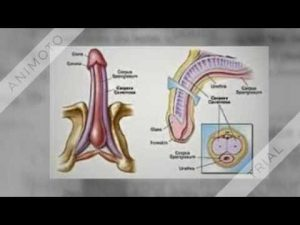Penis Enlargement Natural Remedy